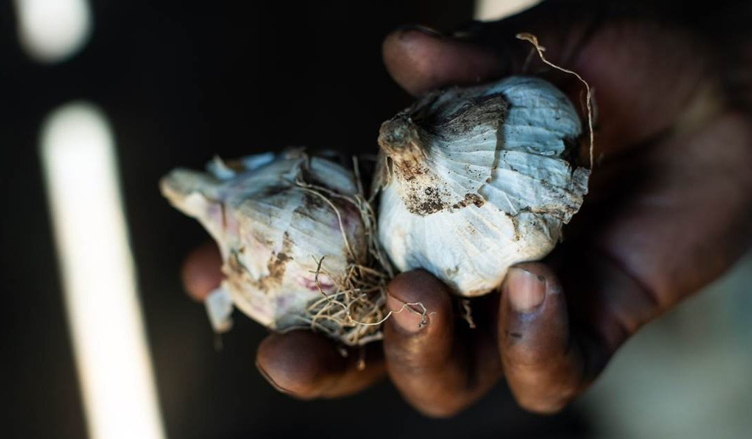 China's relationship with Africa is illustrated by garlic tensions