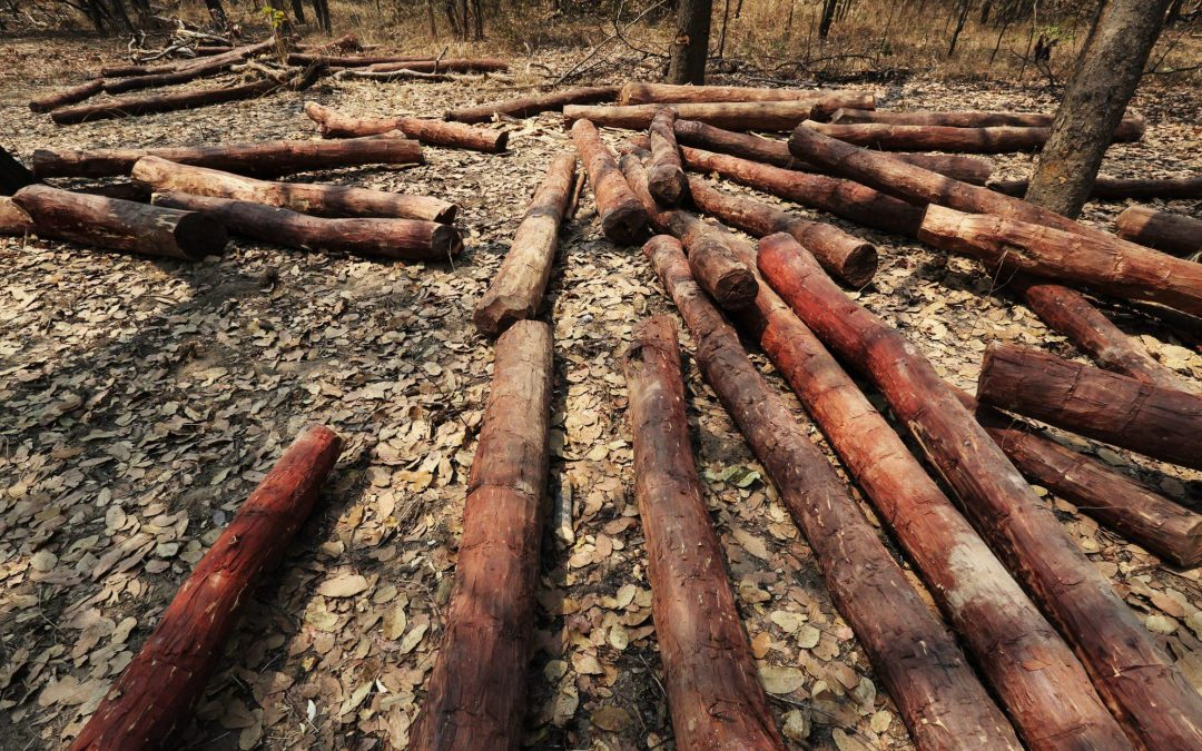 China's unending demand for rosewood furniture is damaging African forests
