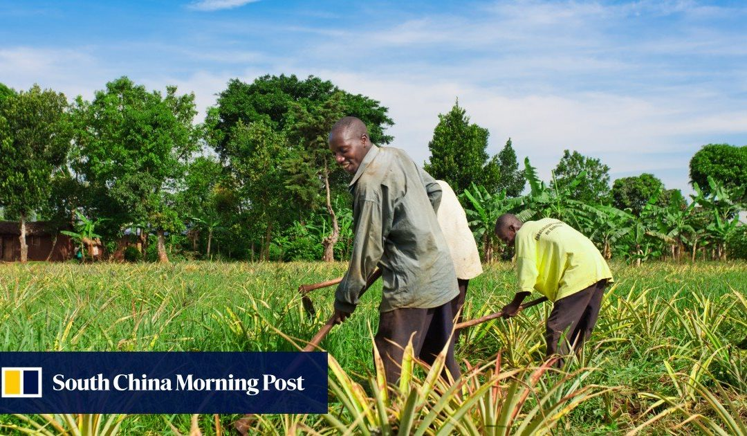Uganda asks China to buy African agricultural products to cut trade deficit